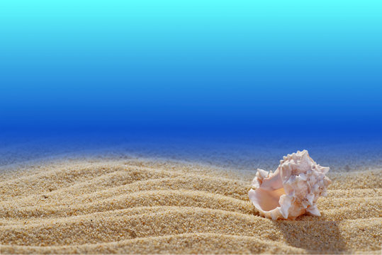 Scene of the seabed. Shell in the sand. Close-up. Blue background. Free space for text or image. A high resolution.