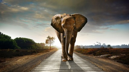 elephant walking on road