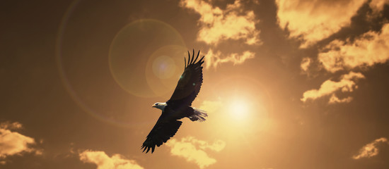silhouette eagle flying against evening sunset sky with lens flare.