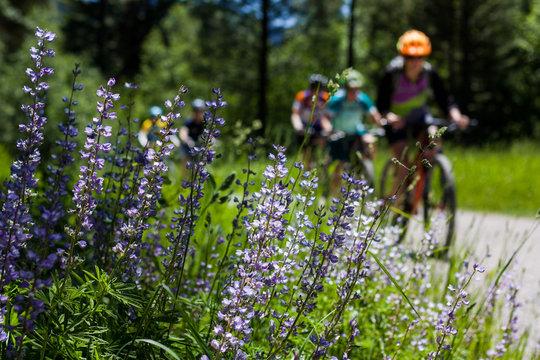 Mountain Biking Missoula Montana