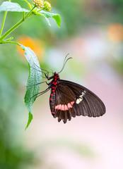 Foto op Textielframe Vlinder Beautiful heliconius butterfly sitting on flower in a summer garden