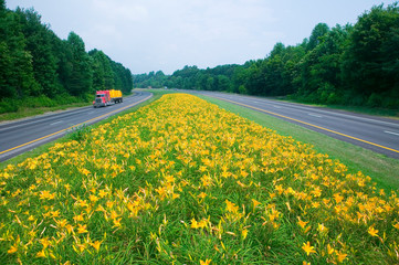 Wall Mural - Yellow truck driving on yellow flower lined state highway in rural Virginia