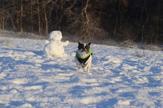 Dog In Snow Covered Landscape