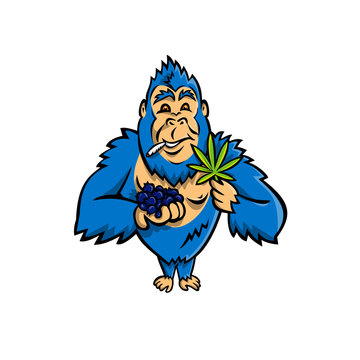 Mascot icon illustration of a blue gorilla holding a bunch of blueberry on one hand and cannabis leaf on other while smoking a joint standing from front on isolated background in cartoon style.