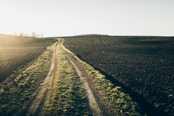 Fertile land. The road going to the horizon in the field.