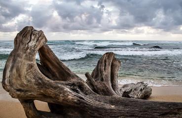 Fototapeta Driftwood on Beach in Hawaii obraz