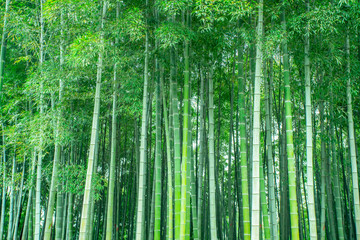 Photo sur Aluminium Bamboo Background material of green bamboo forest