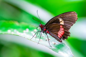Foto auf Leinwand Schmetterling Beautiful heliconius butterfly sitting on flower in a summer garden