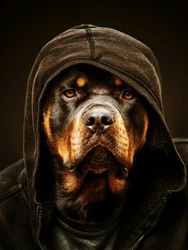 Portrait Of Dog Wearing Hooded Shirt