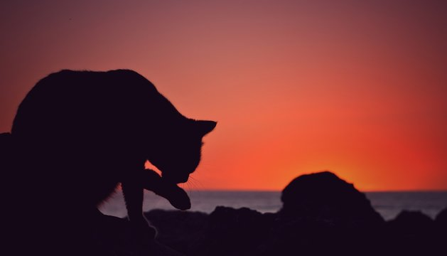 Silhouette Cat Licking Paw Against Orange Sky