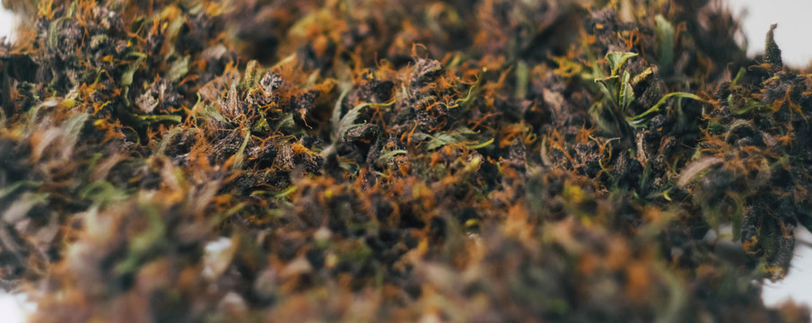 Cannabis buds pattern. Marijuana banner. Smoking weed
