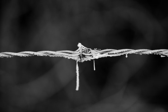 Close-up Of Frosted Barbed Wire Fence