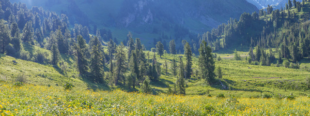 Wall Mural - Panoramic view, mountain flowering valley, alpine meadows
