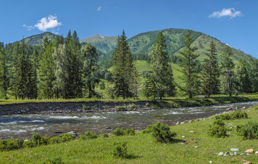 Wall Mural - Mountain river on a summer morning. Sunny landscape. Travel, summer vacation.