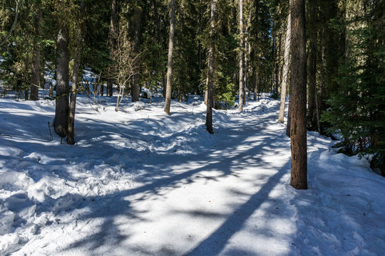 path in the forest winter landscape hiking trail.