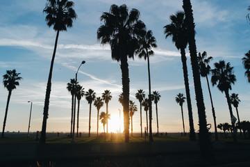 캘리포니아의 야자수 사진