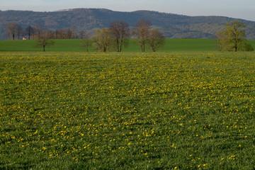 Trawiasta łąka pełna meczy z górami w tle.