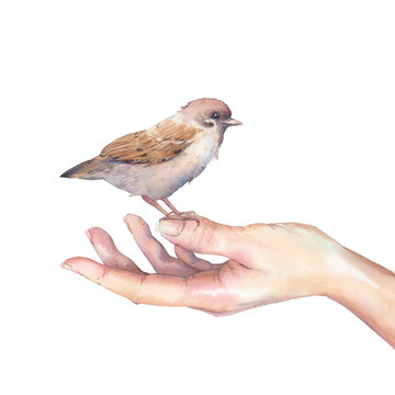 Hand with sparrow bird. Care for nature and wildlife illustration. Watercolor art