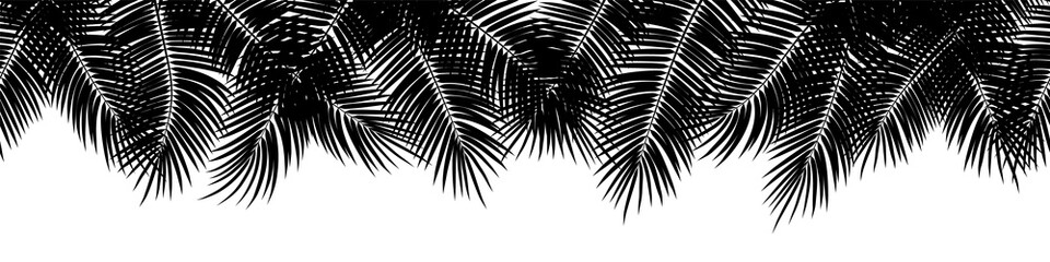 Wall Mural - Black vector seamless summer palm leaves on white background.