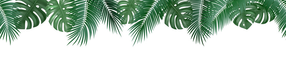 Vector decorative seamless pattern with realistic palm and monstera leaves on white background