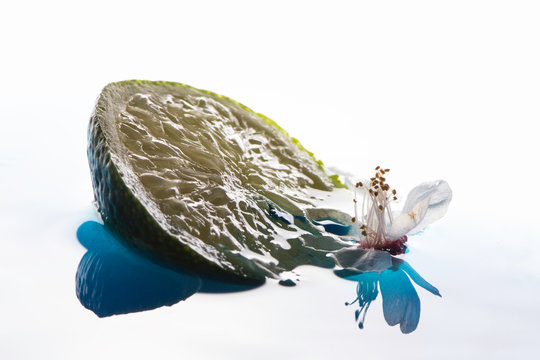 Lime and flower on the surface of the water