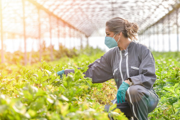 Portrait of a female farmer standing in a greenhouse and wearing her protective mask against coronavirus