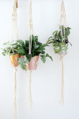 macrame with plant