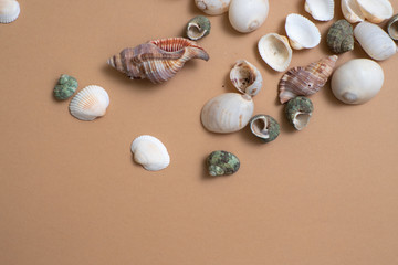 Different seashells on a ochre color background , the concept of holidays by the sea.