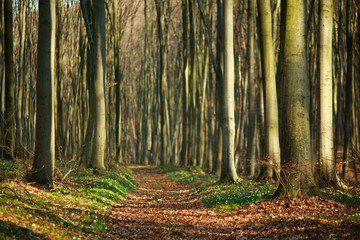 Keuken foto achterwand Weg in bos Hiking trail walkway in spring forest, nature background