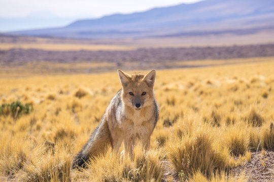 Portrait Of Wolf Standing On Land