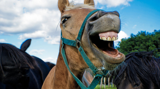 Close-up Of Horse With Mouth Open Against Sky