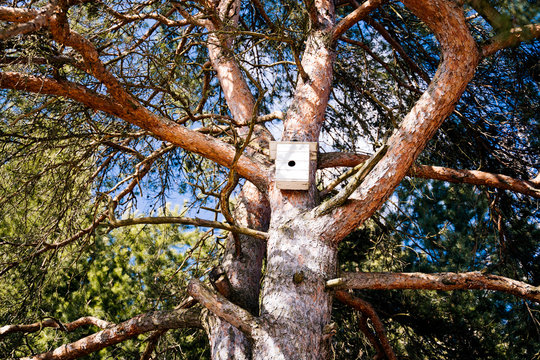 A vintage nesting box installed on the trunk of a big old pine tree.