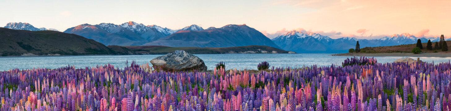 Panoramic View Of Lupines Growing Against Lake Tekapo