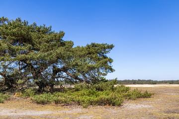Wall Mural - Typical landscape National Park De Hoge Veluwe The Nteherlands