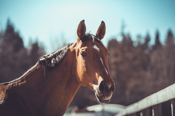 closeup portrait of ukrainian riding horse in spring Papier Peint