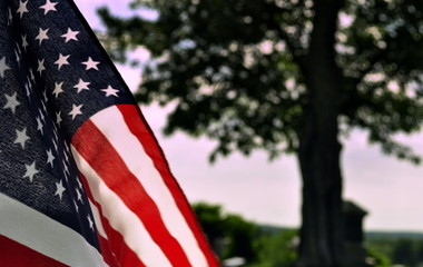 Cropped Image Of American Flag Against Tree
