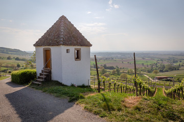 Wall Mural - Vineyards Of Laufen, Muggaedt, Britzingen, Black Forest, Schwarzwald