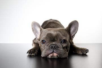 Dog Fotobehang
