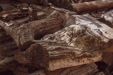 Old tree trunk. Grunge wooden textures of aged tree wood closeup. Natural shades of brown grey hardwood