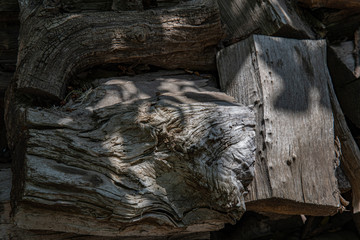Old tree stump. Grunge wooden textures of aged tree wood closeup. Natural shades of brown grey hardwood
