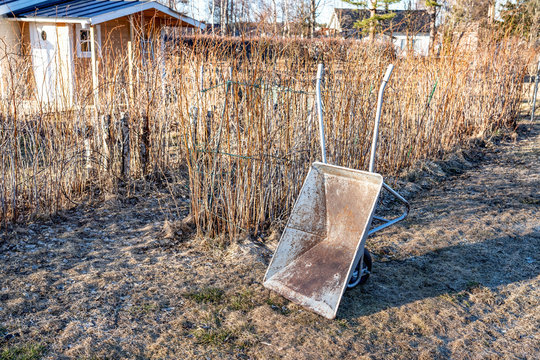 Close up view at rusty grey colored wheelbarrow that stands up right close to raspberry bushes at faded grass. Spring time, no leaves, faded grass. Seasonal clean work in garden