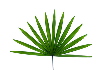 Aluminium Prints Palm tree leaves of palm isolated on white background for design elements, tropical leaf, summer background