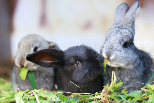 gray, black little rabbits eat green grass