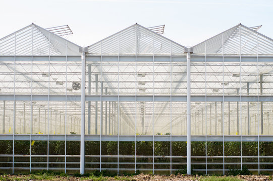 Exterior of a greenhouse made of glass