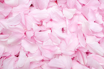 Cherry blossom petals texture. Top view. Soft pink and white flowers petals covering the ground. Close up. Wedding concept or party celebration decoration. Copy space.