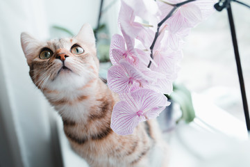 Cat with big eyes sits on a windowsill next to an orchid. Wall mural