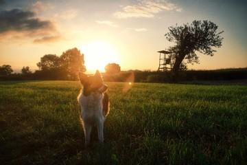 Foto auf Gartenposter Rosa dunkel Standing On Landscape At Sunset