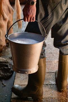 Frisch gemolken Milch in Stall eines Bauernhofs