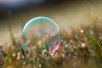 Soap bubble in  grass