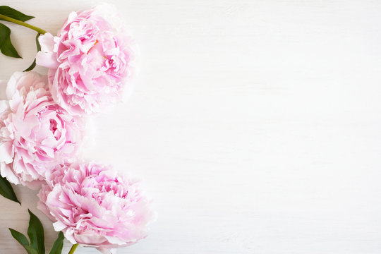 White wooden background with three pink peonies with space for text.